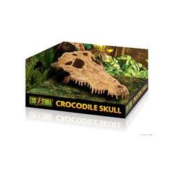 Krokodil kranium ca 22cm