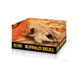 Buffel skalle ca 23cm