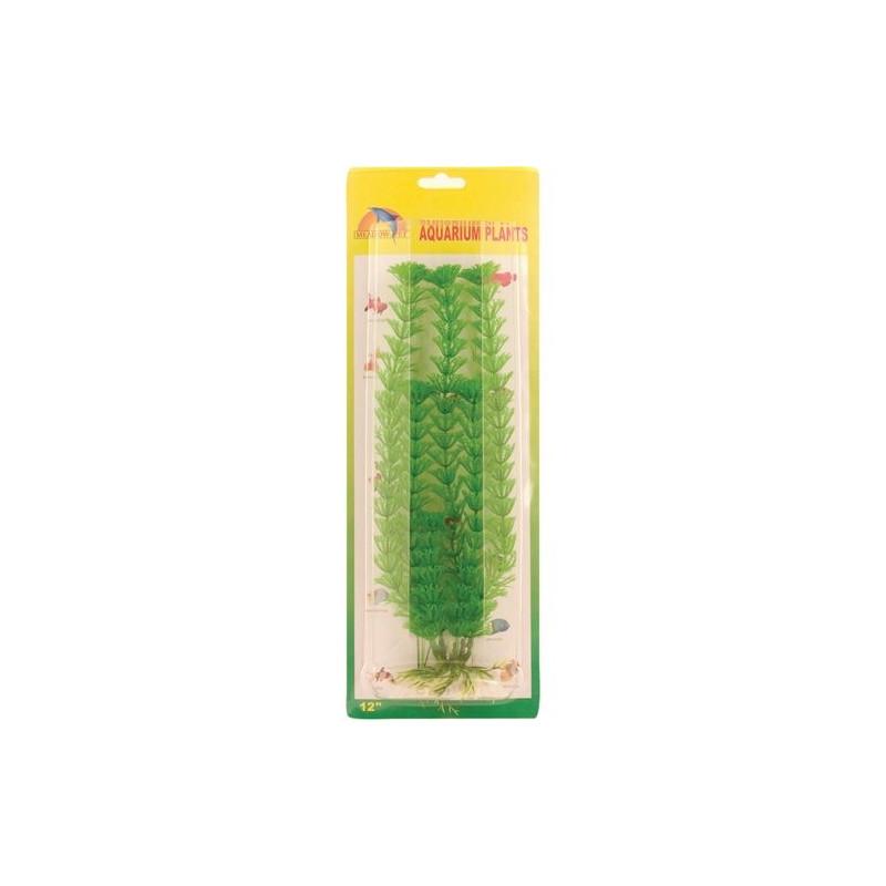 Grön ambulia 30 cm