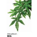 Abutilon Liten ca 40x25