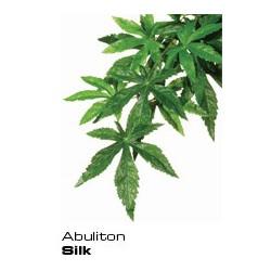 Abutilon Small